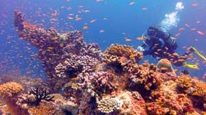 Islas Madivas submarinismo