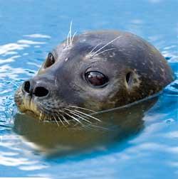 focas en acuarios