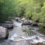 Curso del río Besaya. Cantabria