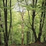 bosques de cantabria otoño