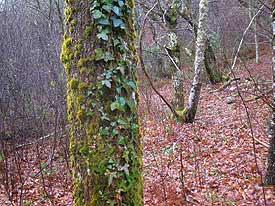 Otoño en Quiros Asturias