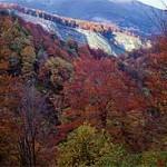 bosques cantabria