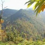 bosques cantabria otoño