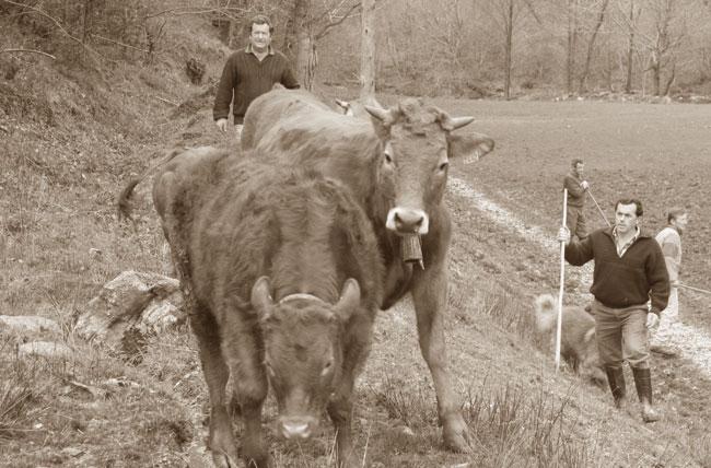 vaqueiros_02