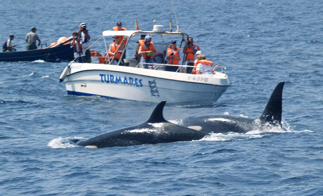 ballenas-y-delfines_02