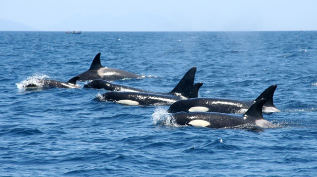 ballenas-y-delfines_03