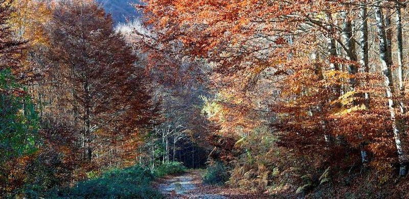 Pirineo de Navarra