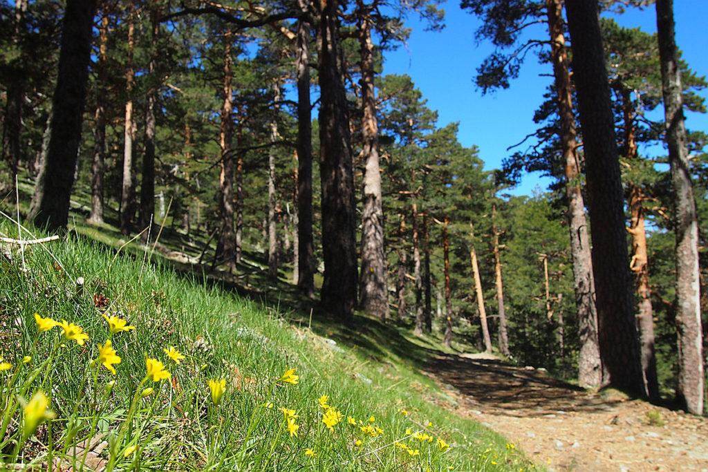 Camino Schmidt. Sierra de Guadarrama