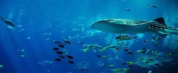 Buceo Islas Maldivas